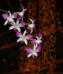 orchids2 (twhrider) Tags: bigmomma thechallengefactory herowinner
