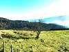 au dessus de MUNSTER  63  les VOSGES,  Beaute et Paysages de notre belle France, Guy Peinturier (GUY PEINTURIER) Tags: vairessurmarne beautedefrance guypeinturier bellefrance paysagesdefrance peinturierguy