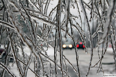 Icy coating (Can Pac Swire) Tags: trees winter toronto ontario canada storm cold tree ice broken frozen branch crystal branches canadian fallen icicle icicles freezingrain sleet wintry downed crystalized crystalised aimg2333