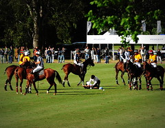 117th Hurlingham Club Open Championship, Argentina / 117 Abierto de Hurlingham YPF () Tags: vacation horse holiday latinamerica southamerica argentina argentine leather cheval nikon pony 70300mm polo rtw pferd vacanze tack hest roundtheworld paard sudamerica triplecrown  polopony amricadosul amricalatina globetrotter southernhemisphere zonasul amriquelatine polomatch  poloclub argentinien 16days  hurlingham equidae onhorseback amricadelsur sdamerika zonea hurlinghamclub worldtraveler  ariannin  repblicaargentina littleeurope laaguada  americadelsud chukkas  argentinidad pologame poloteam ladolfina   d700 zonaa nikond700 chukkers abiertodehurlingham  playerdown triplecorona 117thhurlinghamopen hurlinghamopen  chukers tradiciondelpoloargentino