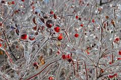 (KoVladimir) Tags: winter ice nikon d5000