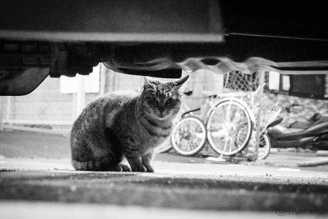 Today's Cat@2014-01-09