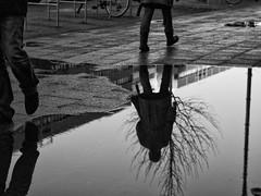 In Motion (kohlmann.sascha) Tags: street blackandwhite bw plant reflection tree berlin blancoynegro nature monochrome rain weather puddle deutschland noiretblanc natur pflanze streetphotography monochrom schwarzweiss reflexion spiegelung baum regen biancoenero poça wetter lapoza flaque pozza pfütze schwarzweis urbanarte streetfotografie strasenfotografie elregajo ilobsterit лу́жа 小水坑