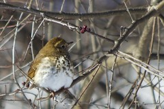 Slim Pickin's (Kar Amen) Tags: winter snow birds