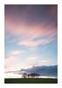 Spring Breeze (A-D-Jones) Tags: wood pink trees sun field grass set clouds landscape movement long exposure dusk crop