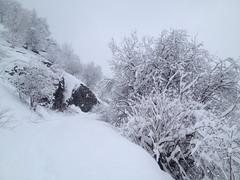 Chute de neige 23 mars 2014