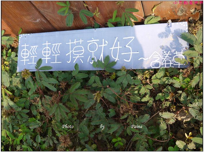 嘉義梅山時光跡咖啡 (36).JPG