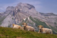 Gourette (Julin Lpez Photography) Tags: mountains paisaje montaa francia vacas pirineos gourette aubisque