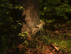 one day in the woods (irina_escoffery) Tags: