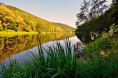 Douce quitude du soir (Excalibur67) Tags: forest landscape nikon sigma alsace paysage reflexion reflets eaux tangs d7100 vosgesdunord forts ex1020f456dchsm