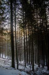 IMGP5795 (laurec.) Tags: allemagne balade neige oppenau