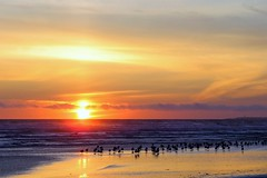 Setting Sun (Patricia Henschen) Tags: kalaloch lodge olympicnationalpark olympicpeninsula pacificocean beach olympic nationalpark sunset ocean gulls clouds