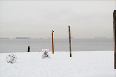 Stranger on the Shore (HereInVancouver) Tags: woman beach snow ocean pacific englishbay vancouver bc canada candid poles streetphotography thingstodobythewater freighters seagull snowmen