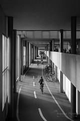 DSC09823_s (AndiP66) Tags: architecture architektur basel schweiz switzerland petermerian gebäude building blackandwhite schwarzweiss schwarz weiss black white monochrome sony sonyalpha 7markii 7ii 7m2 a7ii alpha ilce7m2 sonyfe28–70mmf35–56oss fe 28–70mm f35–56 sel2870 emount kitlens andreaspeters