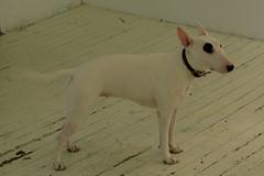 (paul.comstock) Tags: manhattan nyc newyork february 2017 feb2017 urban digital digitalphotography digitalphotograph canons120 canon s120 8feb2017 wednesday dog canine gallery bowery