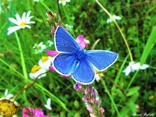Butterfly 1195