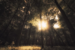 Good weather conditions (-SebsTian-) Tags: outside sun shadow trees tree nature sunshine sony a58 sigma 1020