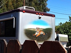 Tiger Beat (misterbigidea) Tags: travel camping trees urban orange art home nature mobile fence landscape artwork backyard mural tour hand stripes painted tiger lifestyle tourist neighborhood traveller jungle parked resting camper gypsy stockton sanctuary winnebago fencedin ontheotherside