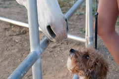 20D_20070527_0142.jpg (rogerhoward) Tags: california horse dog animals archie comet tehachapi centralcalifornia stallionsprings julianyberg