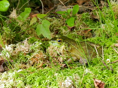 Bullfrog (Christine_Ray) Tags: park county new pine state reserve national jersey pinelands salem barrens parvin belleplain belleplaincapemayandparvin capemayandparvin