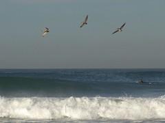 dsc02113-cropped-bigbirds_6282 (dudegeoff) Tags: 2005 jpg 6282 0120tpbhighwaves 20050120tpbhighwavesdsc02113croppedbigbirds6282jpg dsc02113croppedbigbirds