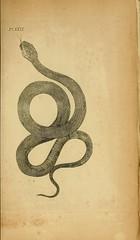 n68_w1150 (BioDivLibrary) Tags: amphibians reptiles pictorialworks harvarduniversitymczernstmayrlibrary bhl:page=3708317 dc:identifier=httpbiodiversitylibraryorgpage3708317