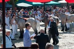 DSC_2316 (Ton van der Weerden) Tags: horses horse dutch de cheval belgian nederlands belges draft chevaux belgisch trait ijzendijke trekpaard trekpaarden