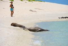 Laysan_monk_seals_0063 (G Allen Smith) Tags: beach monument island marine northwest megan national hawaiian herrick monkseal laysan papahanaumokuakea