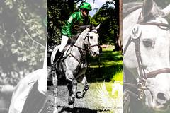 031 (JBZ) Tags: horse white green forest wiesbaden cross action military country competition international grn wald pferd hest paard obstacles biebrich schimmel gelnde eventing vielseitigkeit pfingstturnier