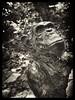 Monkey World Memorial (Merv Williams) Tags: bw sculpture statue zoo monkey aperture olympus dorset nik monkeyworld niksoftware jimcronin silverefexpro silverefexpro2
