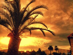 Sunsrise over Nice (French Riviera). (Chris, photographe de Nice (French Riviera)) Tags: sky sunrise landscape sony palmtree android frenchriviera xperia picsaypro
