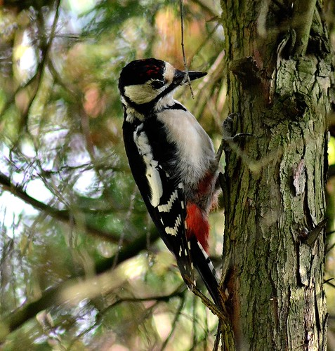 Mr.Woodpecker