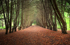 Apley Woods (Bogger3. off Line) Tags: autumn trees sunnyday fallenleaves coth canonlens apleywoods canon600d coth5