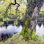 Autumn-River-2