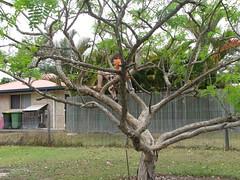 IMG_0104 (mellymum1) Tags: henry treeclimbing