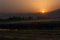 The afternoon we saw thousands of Cranes (JoLoLog) Tags: sunset israel lorien northernisrael canonxsi thehulavalley
