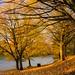 Redland Green: November frost