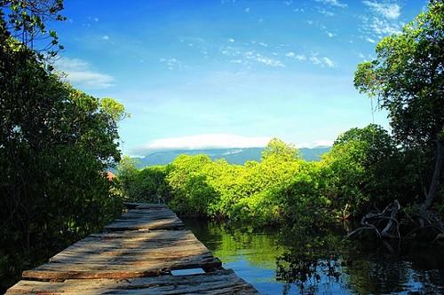 Hutan-Mangrove-di-Gili-Sulat-Lombok-Timur-3