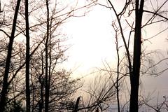 Bazel - Kruibeke (Luc Herman) Tags: travel winter tree nature silhouette landscape bomen belgium natuur flanders pracht kruibeke bazel