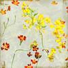 Marigolds (~Jeannine~) Tags: flowers orange flower texture yellow blossoms explore textures ie marigold marigolds textured magicunicornverybest magicunicornmasterpieces
