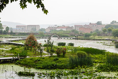 Wuhan 2013-208 (Sean Maynard) Tags: china bridge water canon botanical pond footbridge wuhan botanicalgarden hubei pedestrianbridge 6d wuchang canon6d chineseacademyofsciences lightroom5 wuhanbotanicalgardens