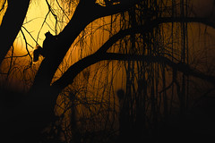 Jungle Sunset (HOWLD) Tags: winter sunset canon squirrel warm howd rework oaklandlake 135mmf2 oaklandgardens 5dmiii howardlaudesign
