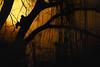 Jungle Sunset (Howard L.) Tags: winter sunset canon squirrel warm howd rework oaklandlake 135mmf2 oaklandgardens 5dmiii howardlaudesign
