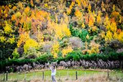 Autumn Colors (iamkelvinloke) Tags: autumn newzealand tree nz otago arrowtown otagonz