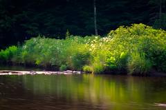 Un été, doucement/A summer, slowly/Un verano, tranquilo/En sommar, försiktigt (Explore] (Elf-8) Tags: wood shadow summer sun forest river flow bush stream vegetation missisquoinord