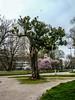 Milano Parco Indro Montanelli albero (alberto martucci) Tags: milanoitaliaitalymilanmailamd portavenezia parcoindromontanelli leica digilux digilux2