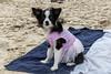 Girls trip to Padre Island! (Rockin'Rita) Tags: padreisland
