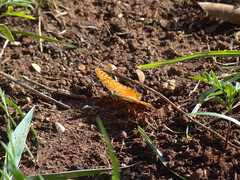 DSC00179 (familiapratta) Tags: sony dschx100v hx100v iso100 natureza inseto insetos nature insect insects
