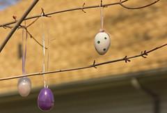 Egg Tree 4 (rumimume) Tags: potd rumimume 2017 niagara ontario canada photo canon 80d sigma easteregg egg tree