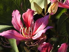 North Coast Regional Botanic Gardens last winter (set of 14) (Lesley A Butler) Tags: nsw australia northcoastregionalbotanicgarden coffsharbour